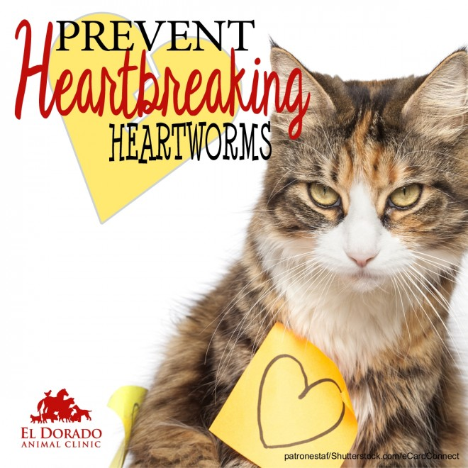 Prevent Heartbreaking Heartworms
