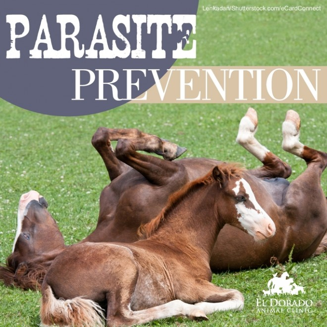 Parasite Prevention